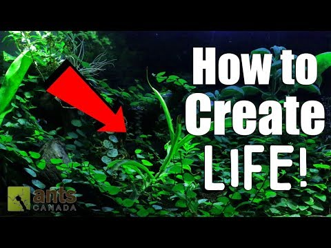 HOW TO CREATE LIFE