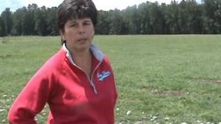 Ninety Farms Grass Fed Katahdin Sheep & Angus Cattle