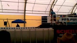 English Springer Spaniel At Wi State Fair