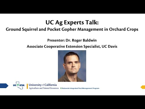 UC Ag Experts Talk: Ground Squirrel And Pocket Gopher Management In Orchard Crops