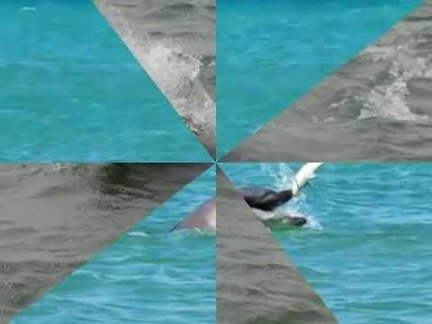 море Черное. Волна //Дельфины в Волне ч.1 // Тамань ...