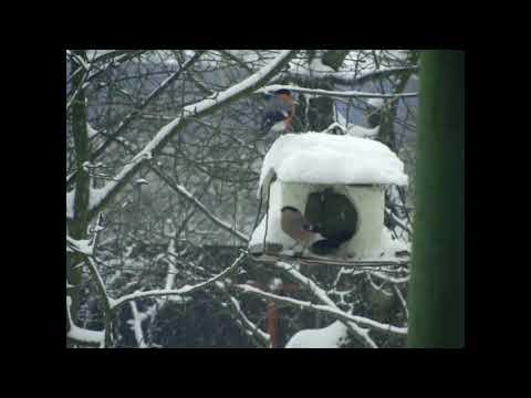 Зимняя сказка Кормушка для птиц
