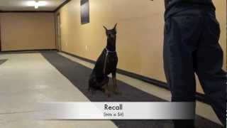 A Glimpse Into A Brb K9 Obedience Training Class