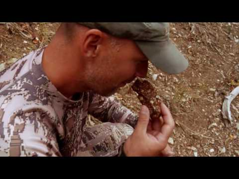 Grizzly Scat - Tastes Like Chicken (not Really)