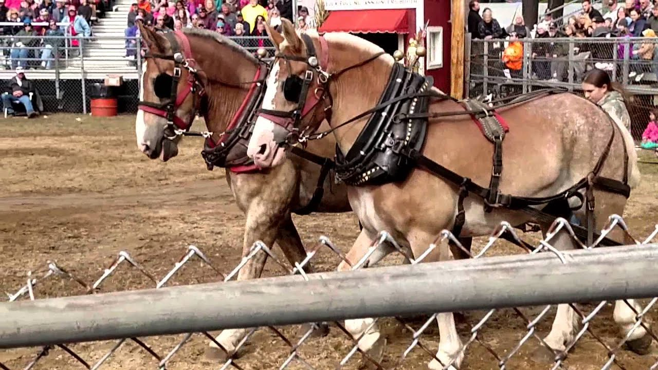 Download Bull and Horse Pullin at Deerfield Fair