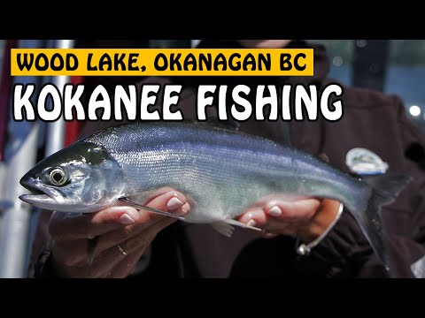 TROLLING FOR OKANAGAN SUMMER KOKANEE AT WOOD LAKE | Fishing With Rod