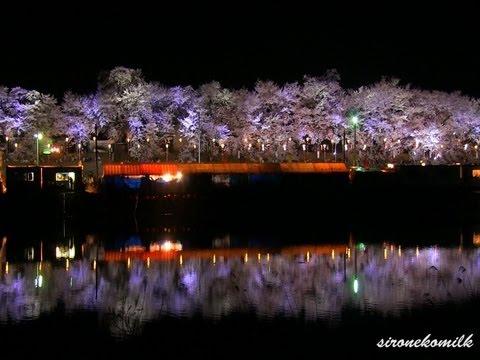 桜前線が日本列島を北上中!