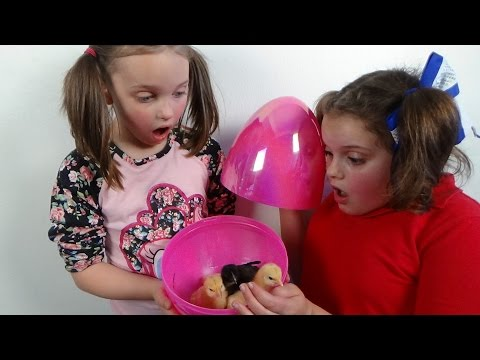 "Thumbnail: Surprise Eggs Baby Chicks ""Annabelle Victoria Rex Toy Freaks Egg Style"""