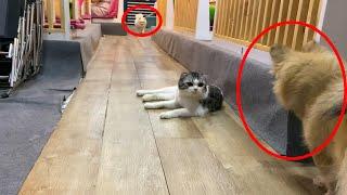 Mèo cân Team Chó | Mèo đánh Chó | Bánh bąo TV