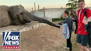 WILD Video: Elephant slaps girl in the face