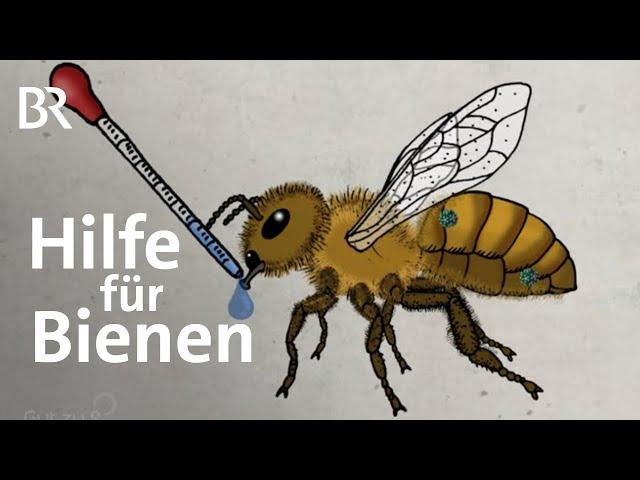 Bienensterben: Was hilft gegen die tödlichen Varroa-Milben | Gut zu wissen | BR