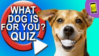 What Dog Should I Get? Take A Quiz