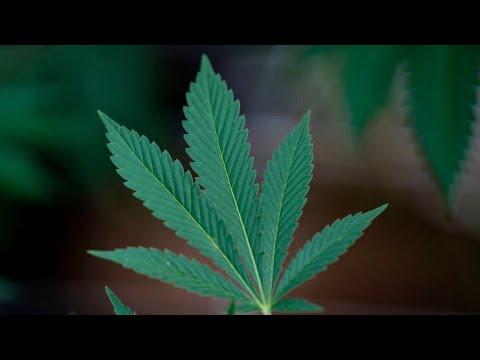 Aurora Cannabis sales surge above expectations