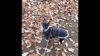 20151216 久しぶりの東高根森林公園散歩。早くダーリンの元に戻りたくて...
