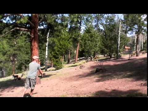 Disc Golf - Beaver Ranch in Conifer, CO Holes 1-6