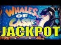 ★JACKPOT !! THAT WHY I LOVE THIS GAME★WHALES OF CASH ...