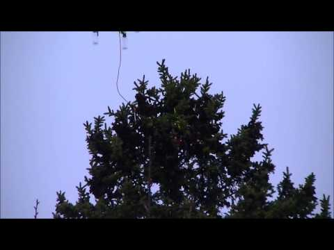 Drone Tree Recovery