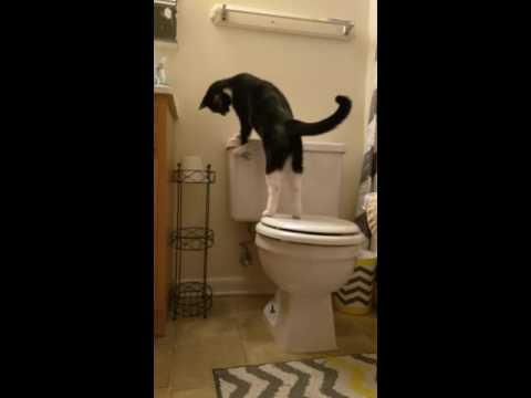 Crazy Flush Again