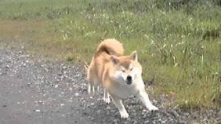 ありし日の愛犬が走る姿です。