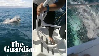 Orcas damage Spanish naval yacht: 'It broke the rudder!'
