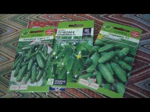 Семена огурцов для посадки в 2020 году   семена   огурцы   огурец   огород   дача