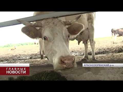 В Орловской области резко вырастет рынок сбыта молока