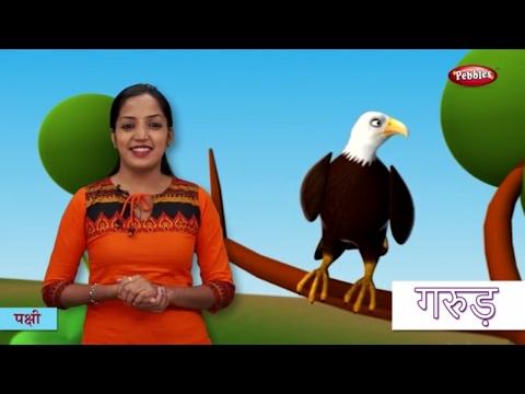 Bird Names in Hindi | हिंदी में पक्षीयों के नाम सीखे | Hindi Bird Names For Children