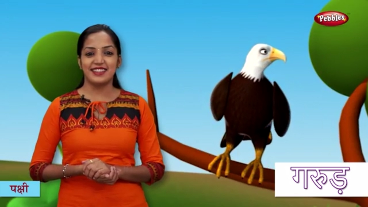 Bird Names in Hindi | हिंदी में पक्षीयों के नाम सीखे | Hindi Bird Names For Children - YouTube