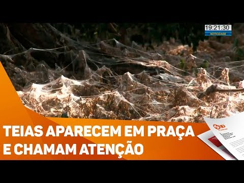Teias aparecem em praça e chamam atenção - TV SOROCABA/SBT