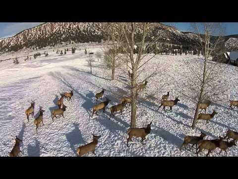 Drone Elk Video 1