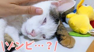 何をしても目を開けたまま寝る猫チロさん