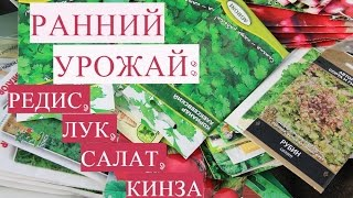Ранний Урожай! Секреты Посадки Редиса, Салата, Лука, Кинзы в Теплице.