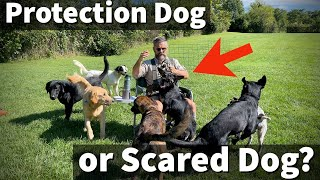 Protection Dog or Scared Dog | Uncle Stonnie's Thoughts on Preventing and Treating Dog Aggression