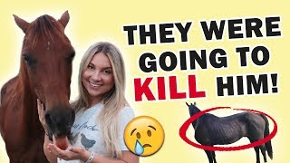 RESCUING A HORSE FROM SLAUGHTER FROM 1000 MILES AWAY