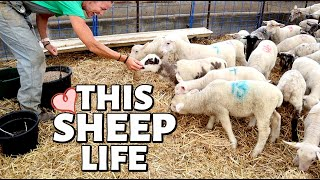 A Day in My Life. 🐑 (LET'S DO SUMMER SHEEP CHORES):Vlog 324