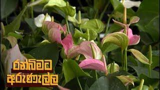 Ranbimata Arunella - (2019-01-07) | ITN Thumbnail