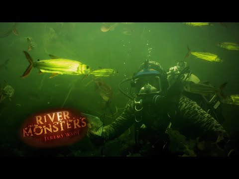 Human Bait: Tiger Fish - River Monsters