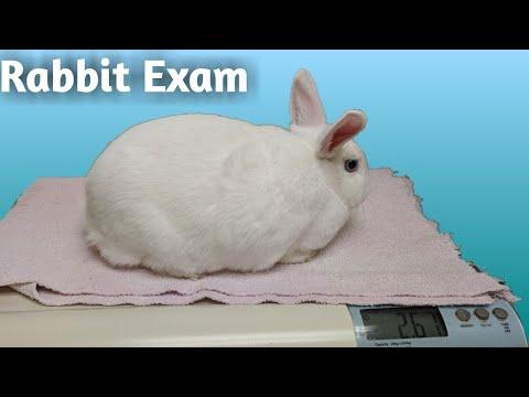 RABBIT EXAM | Exotic Rabbit Veterinarian Clinic