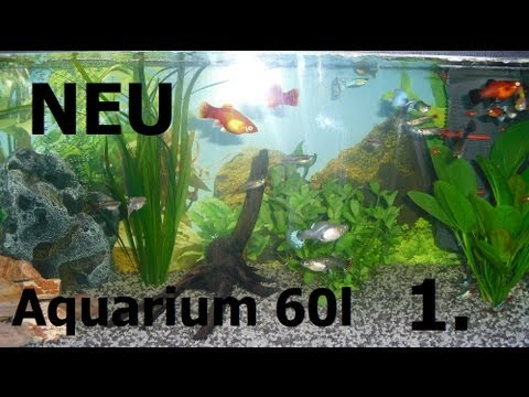 my fish neu gestaltetes 60l aquarium fische youtube. Black Bedroom Furniture Sets. Home Design Ideas