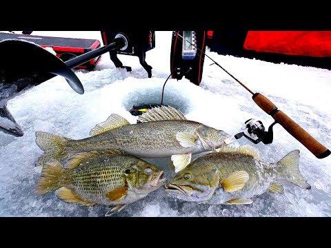 Multispecies Ice Fishing CHALLENGE!!! (Catch & Cook)