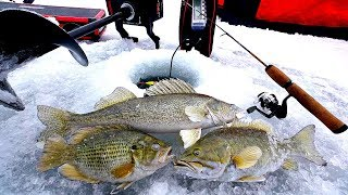 Multispecies Ice Fishing CHALLENGE!!! (Catch & Cook)