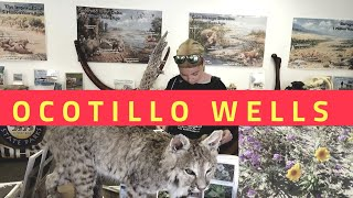 WILD ANIMALS OCOTILLO WELLS DISCOVERY CENTER. LEARNING ABOUT THE DESERT.
