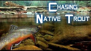 Native Trout Fishing--Perry County, PA !!! | Thanksgiving Break Fishing Trip