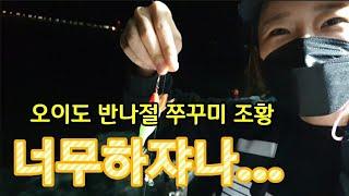 기가막히네/오이도 쭈꾸미낚시 조황/반나절낚시/설봉호