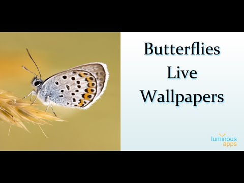 Butterflies Live Wallpaper Android App - YouTube