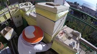 Двухматочное содержание семей весной для наращивания пчёл через решетку на медосбор 09.04.18 г