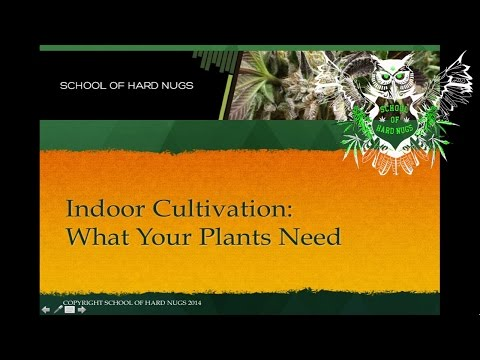 Indoor Cultivation | Getting started with your first grow | Learn how to grow Marijuana | Grow Weed