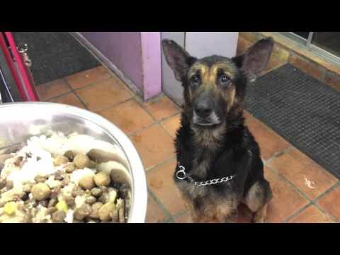 Charles-German Shepherd Rescue