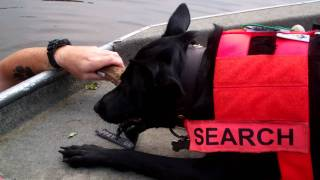 Search Dog's First Boat Training