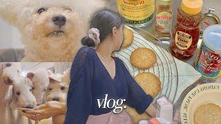 (eng) vlog. 6마리 개들과 전 애견미용사 • …